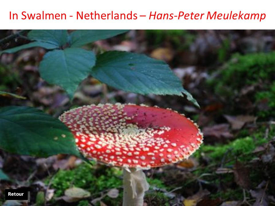 In Swalmen - Netherlands – Hans-Peter Meulekamp