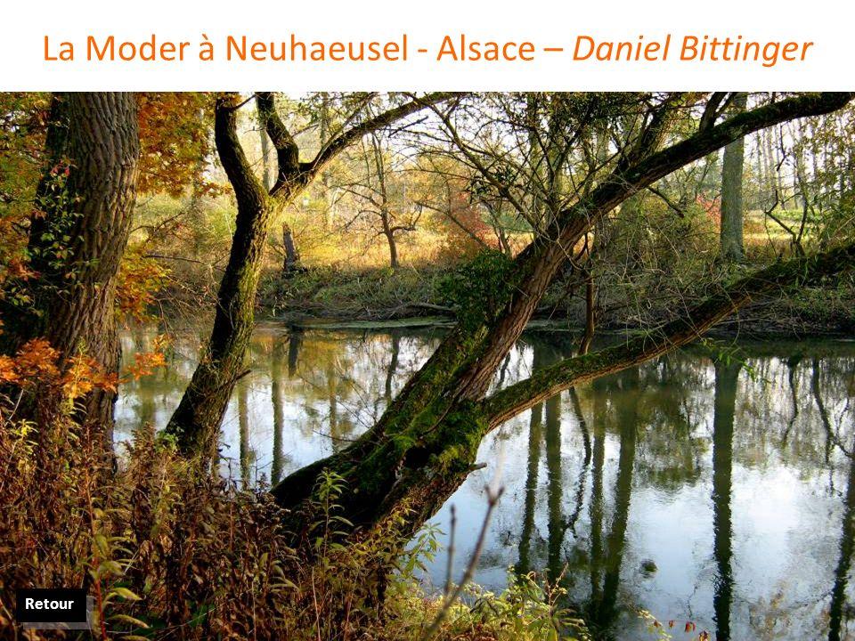 La Moder à Neuhaeusel - Alsace – Daniel Bittinger