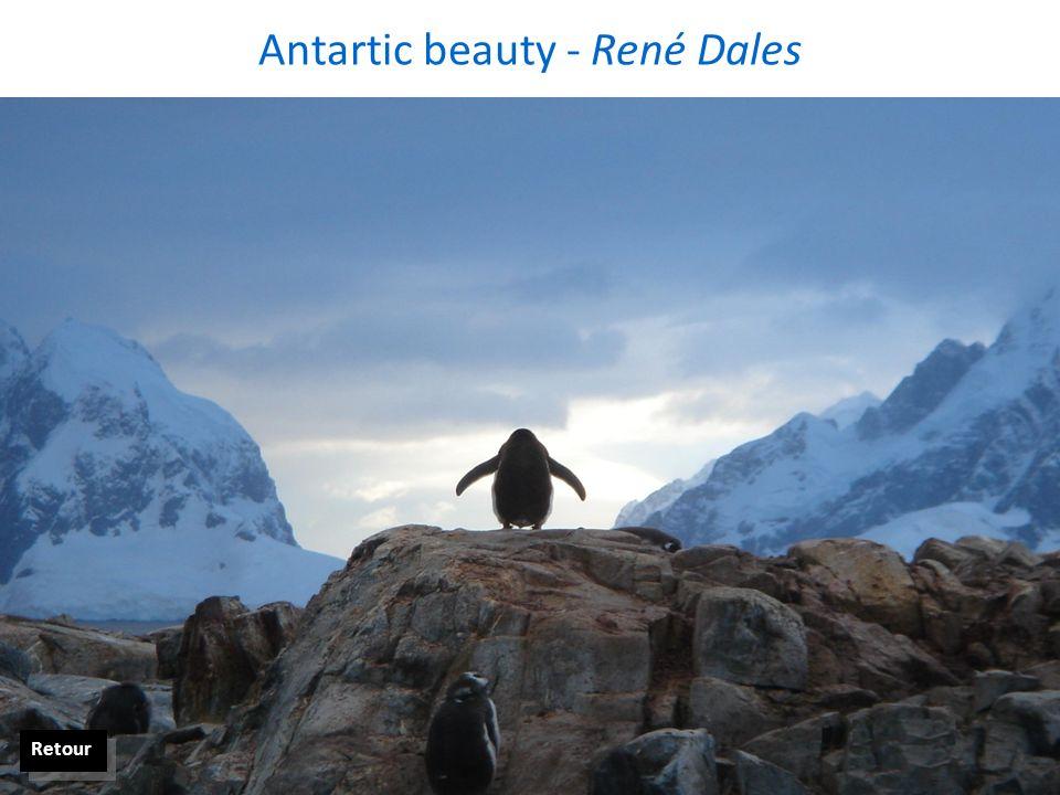Antartic beauty - René Dales