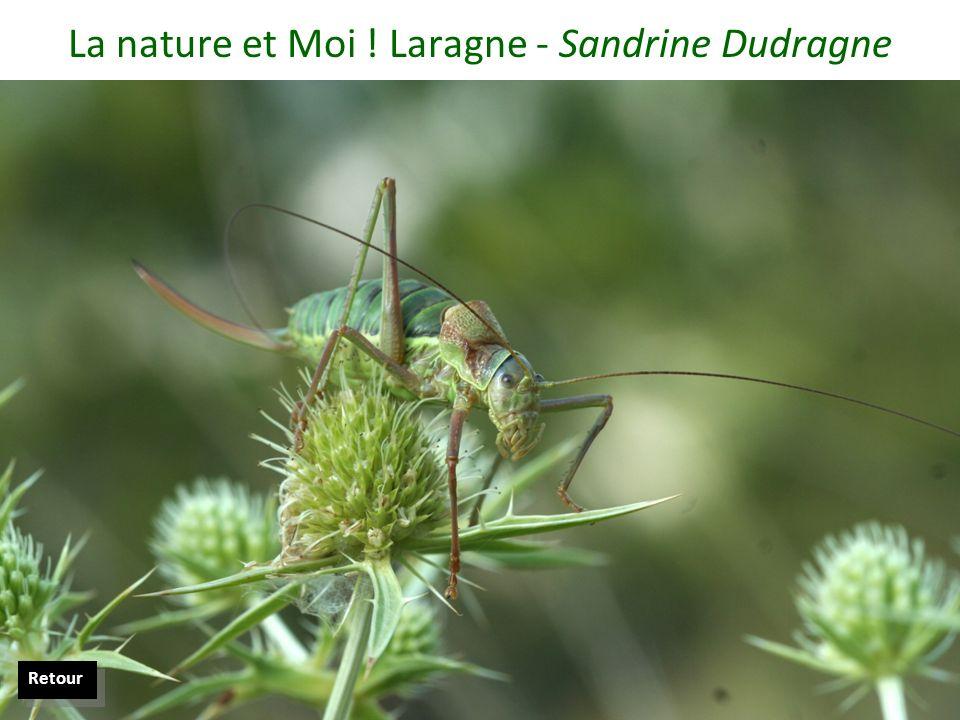 La nature et Moi ! Laragne - Sandrine Dudragne