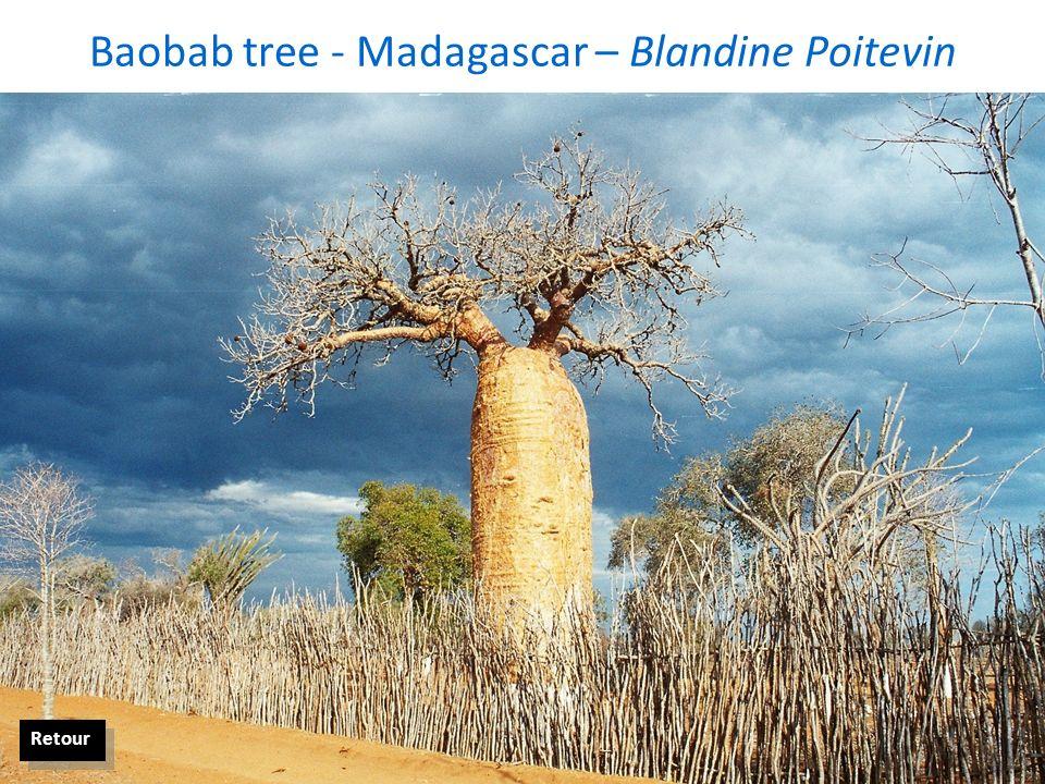 Baobab tree - Madagascar – Blandine Poitevin