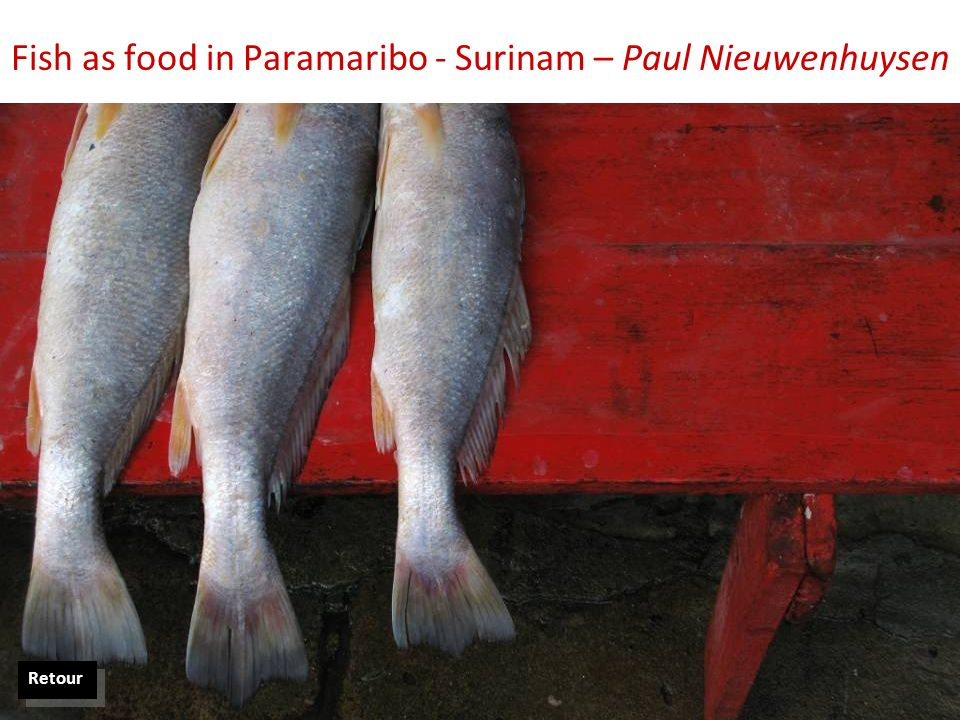 Fish as food in Paramaribo - Surinam – Paul Nieuwenhuysen