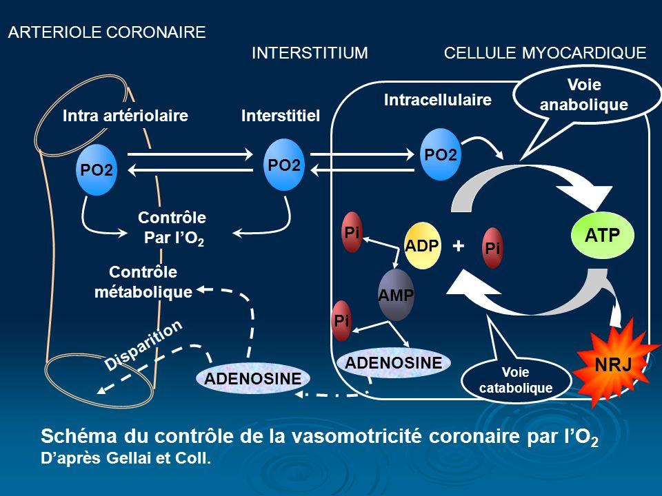 + Schéma du contrôle de la vasomotricité coronaire par l'O2 ATP NRJ