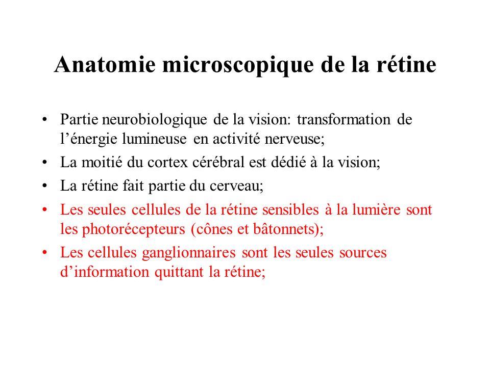 Anatomie microscopique de la rétine