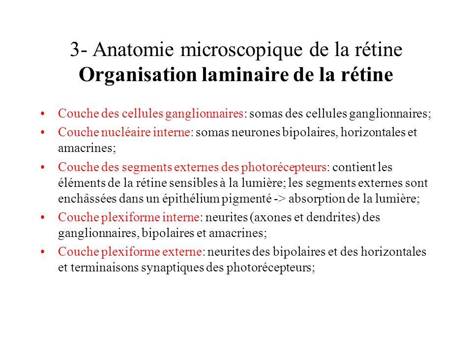 3- Anatomie microscopique de la rétine Organisation laminaire de la rétine