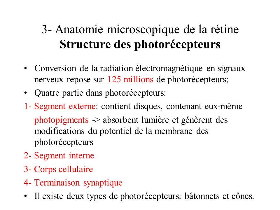 3- Anatomie microscopique de la rétine Structure des photorécepteurs