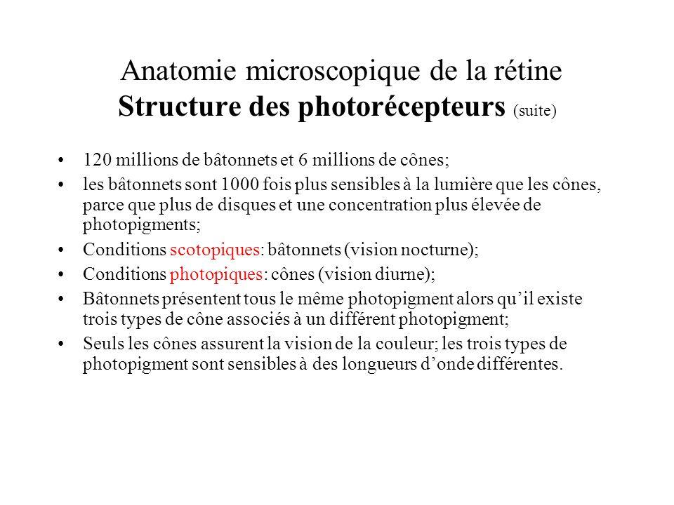 Anatomie microscopique de la rétine Structure des photorécepteurs (suite)