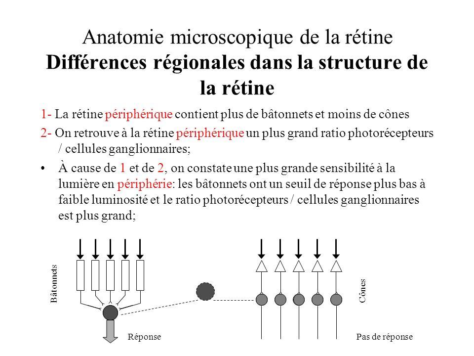 Anatomie microscopique de la rétine Différences régionales dans la structure de la rétine