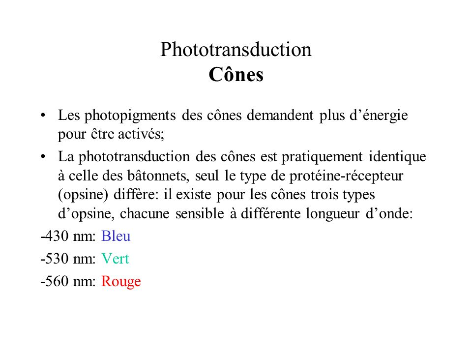 Phototransduction Cônes