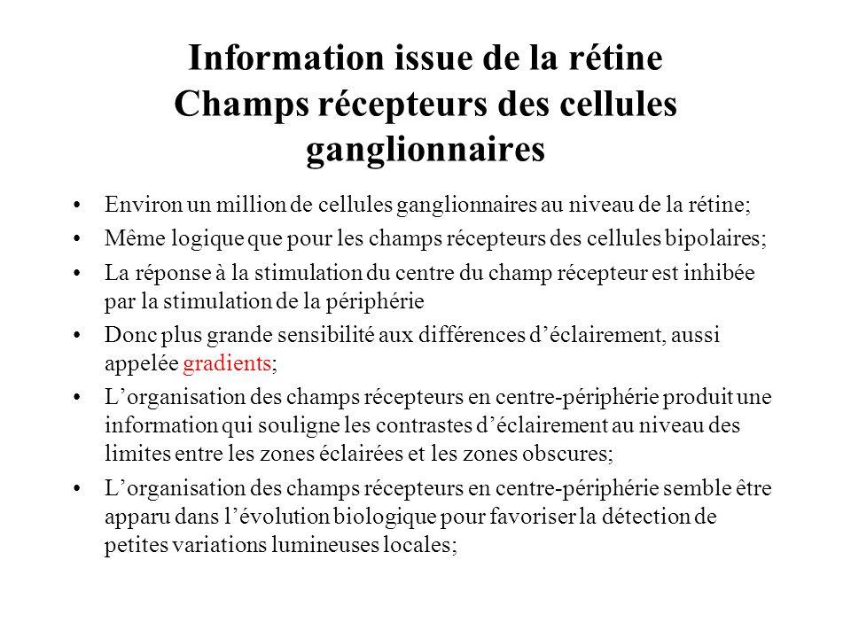 Information issue de la rétine Champs récepteurs des cellules ganglionnaires