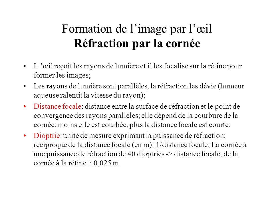 Formation de l'image par l'œil Réfraction par la cornée