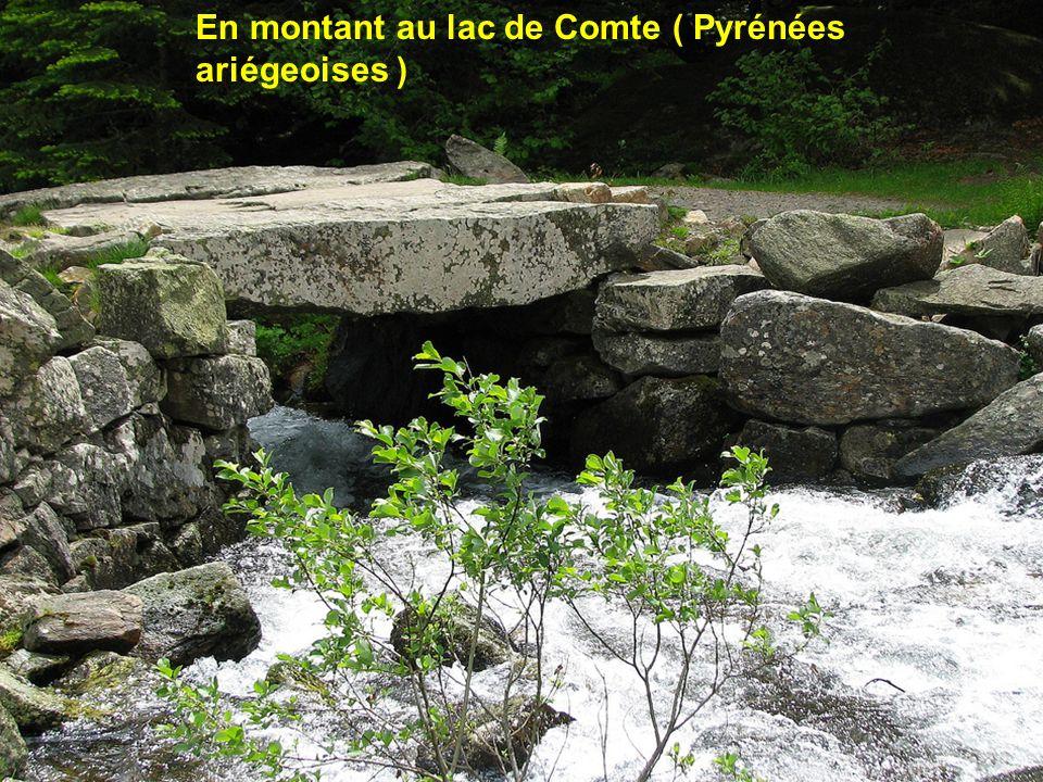 En montant au lac de Comte ( Pyrénées ariégeoises )