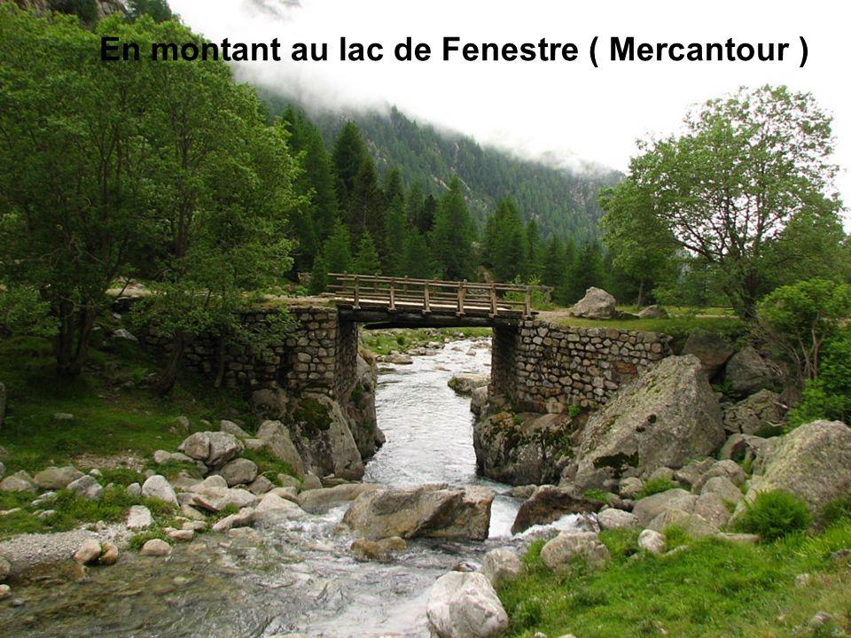 En montant au lac de Fenestre ( Mercantour )