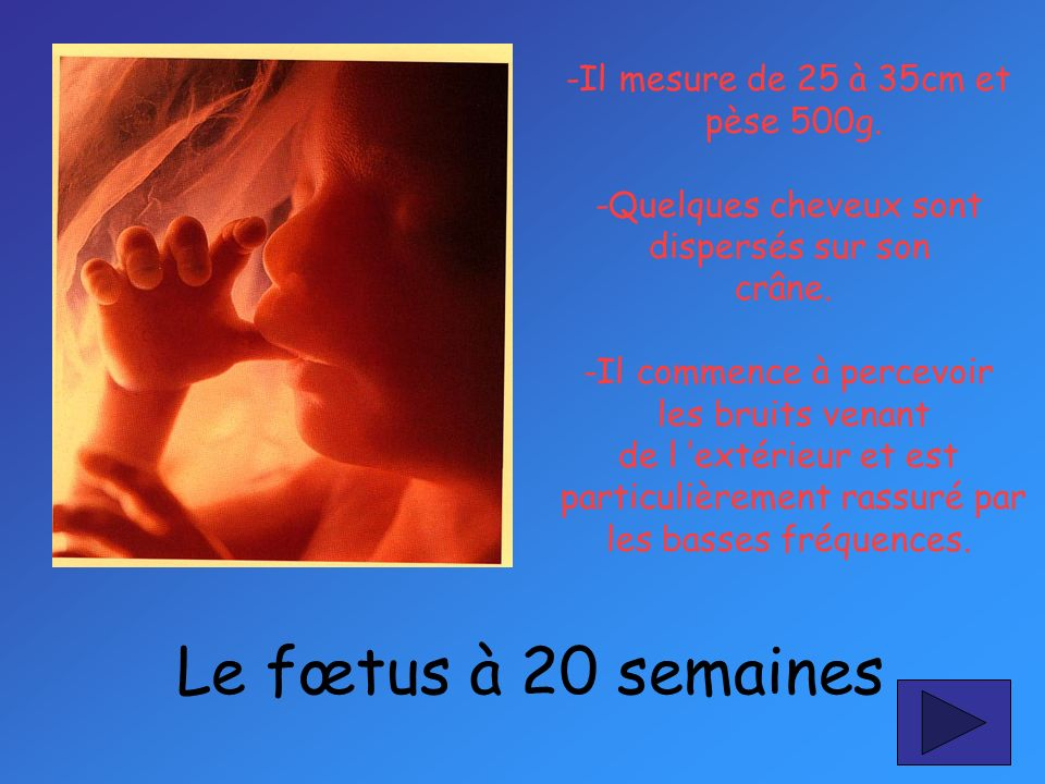 Le fœtus à 20 semaines -Il mesure de 25 à 35cm et pèse 500g.