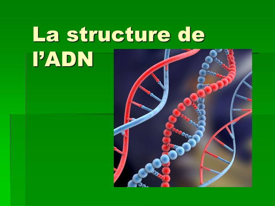 La structure de l'ADN