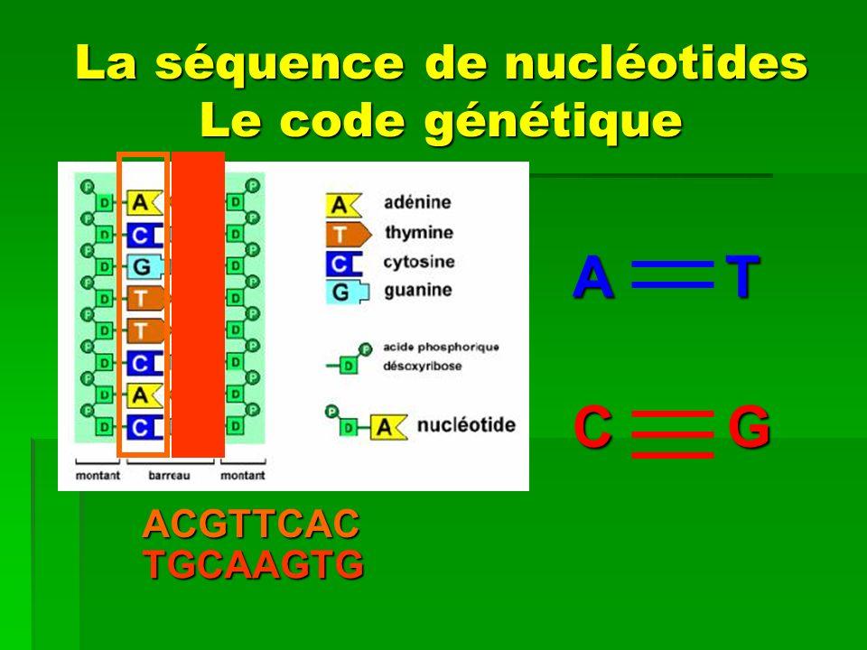 La séquence de nucléotides Le code génétique