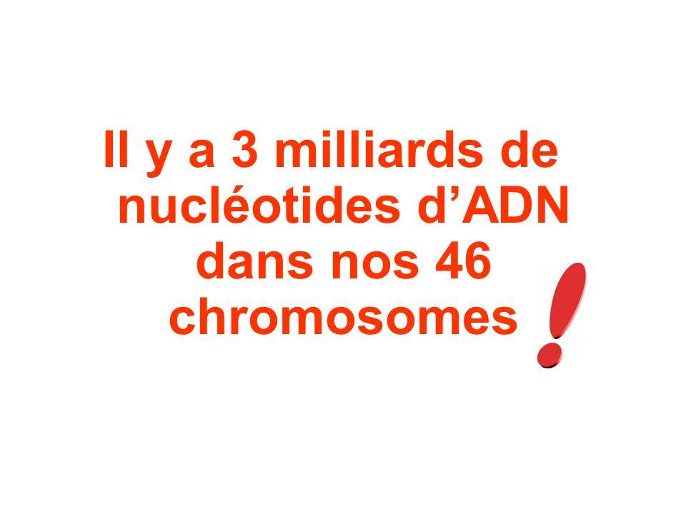 Il y a 3 milliards de nucléotides d'ADN dans nos 46 chromosomes