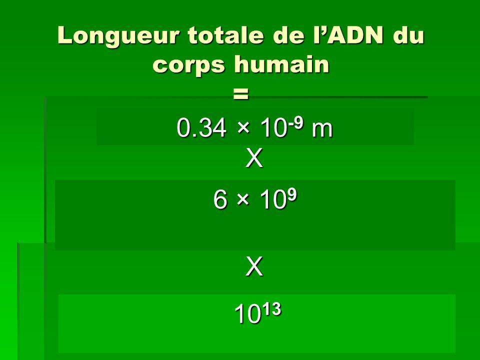 Longueur totale de l'ADN du corps humain =