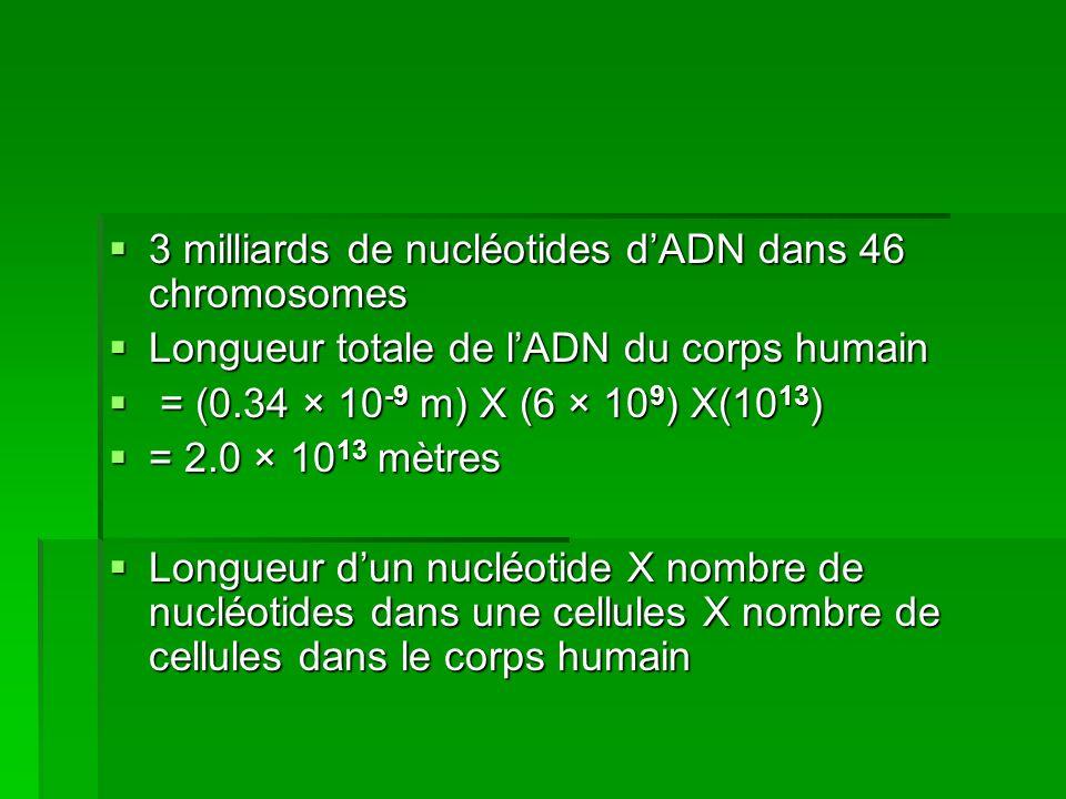 3 milliards de nucléotides d'ADN dans 46 chromosomes