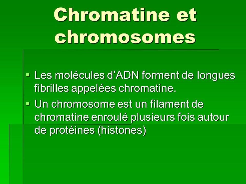 Chromatine et chromosomes