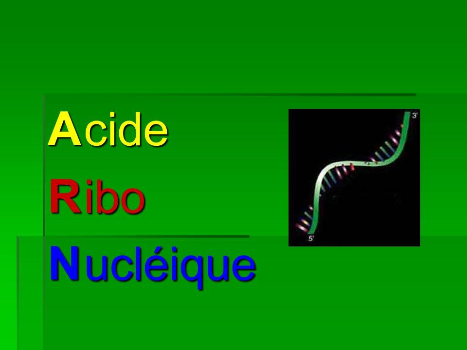 A R N cide ibo ucléique