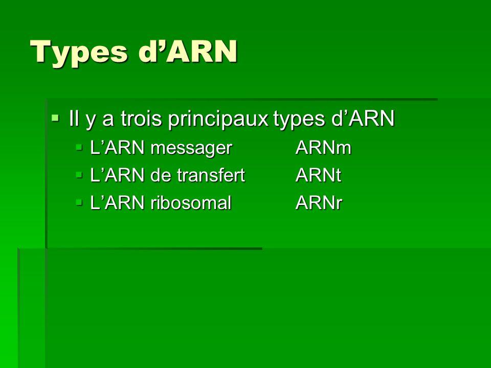Types d'ARN Il y a trois principaux types d'ARN L'ARN messager ARNm