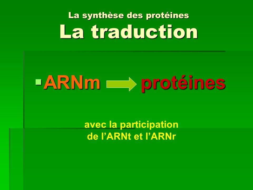 La synthèse des protéines La traduction
