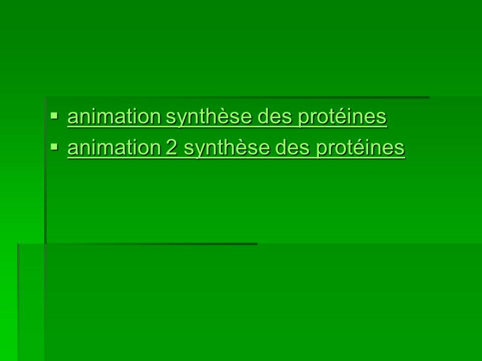 animation synthèse des protéines