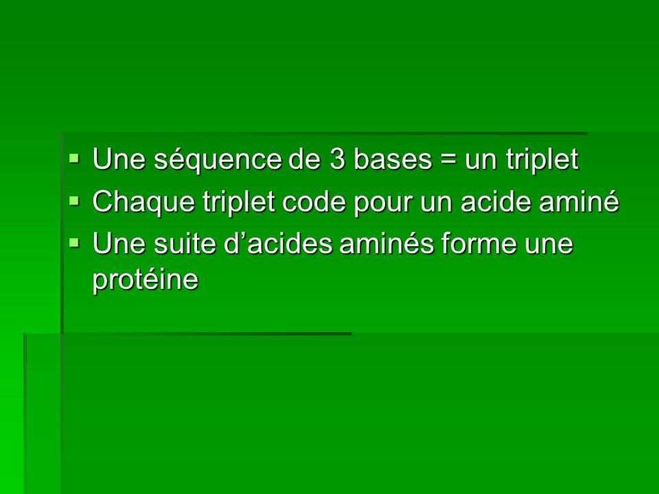 Une séquence de 3 bases = un triplet