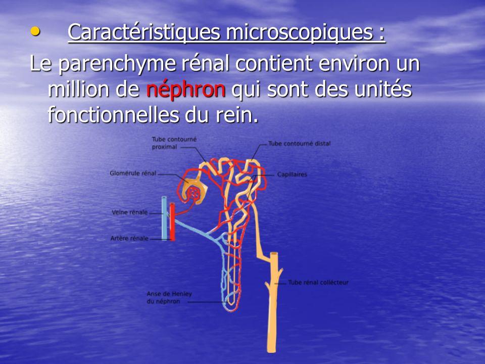 Caractéristiques microscopiques :