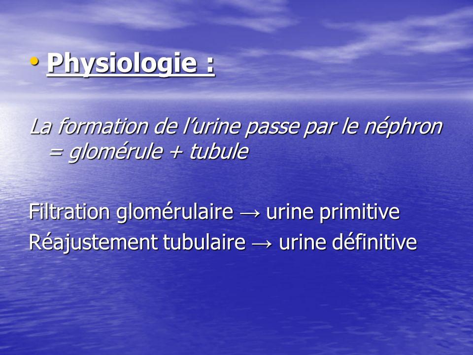 Physiologie : La formation de l'urine passe par le néphron = glomérule + tubule. Filtration glomérulaire → urine primitive.