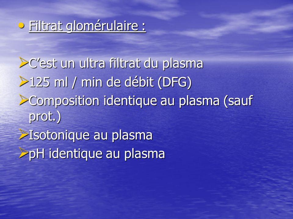 Filtrat glomérulaire :