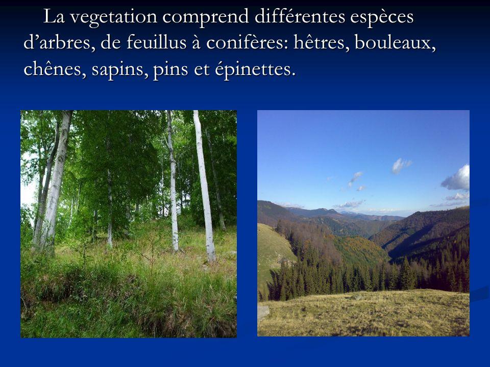 La vegetation comprend différentes espèces d'arbres, de feuillus à conifères: hêtres, bouleaux, chênes, sapins, pins et épinettes.