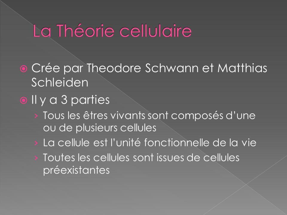 La Théorie cellulaire Crée par Theodore Schwann et Matthias Schleiden