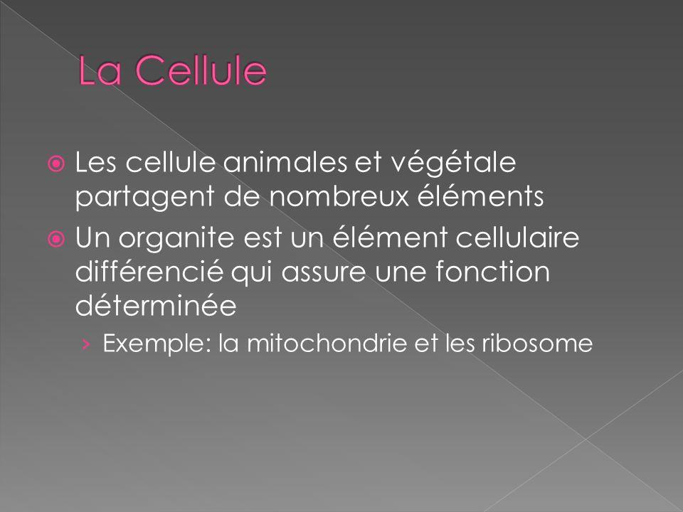 La Cellule Les cellule animales et végétale partagent de nombreux éléments.