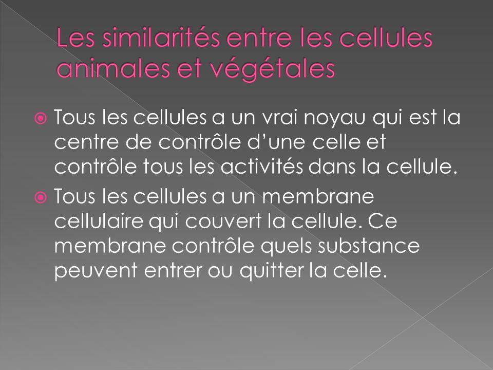Les similarités entre les cellules animales et végétales
