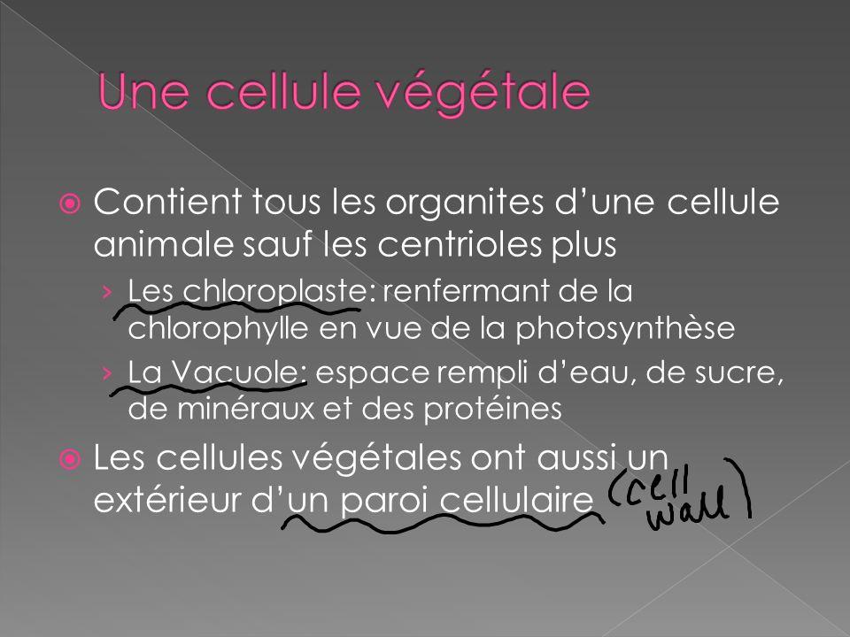 Une cellule végétale Contient tous les organites d'une cellule animale sauf les centrioles plus.