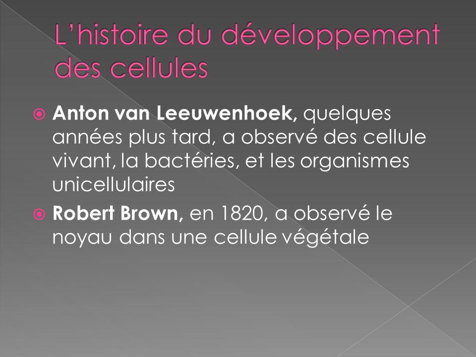 L'histoire du développement des cellules