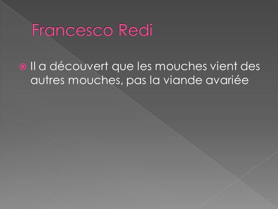 Francesco Redi Il a découvert que les mouches vient des autres mouches, pas la viande avariée