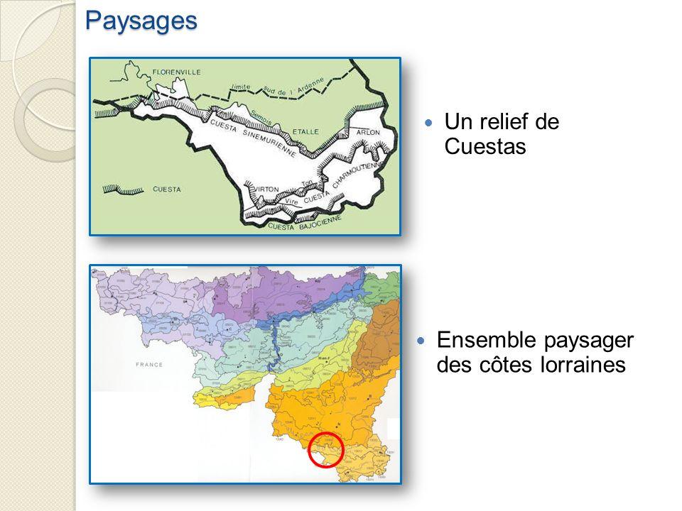 Paysages Un relief de Cuestas Ensemble paysager des côtes lorraines