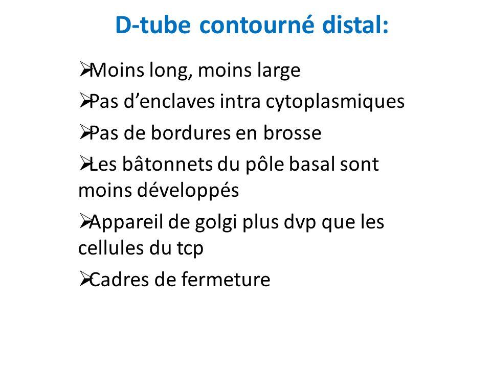 D-tube contourné distal:
