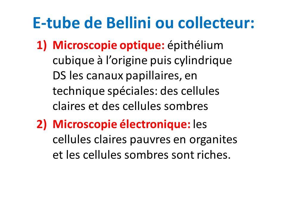 E-tube de Bellini ou collecteur: