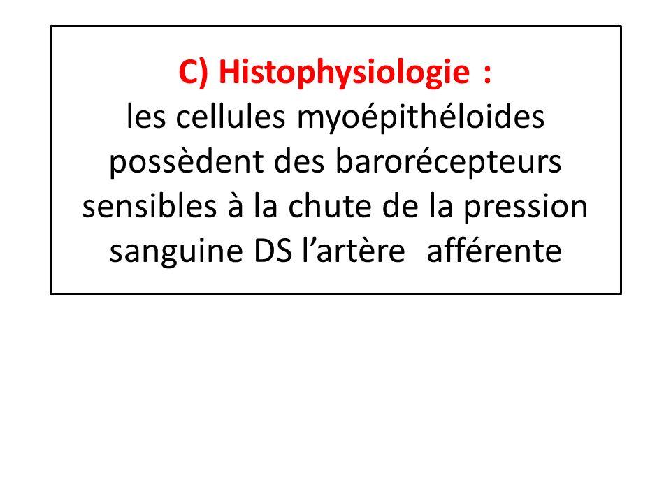 C) Histophysiologie : les cellules myoépithéloides possèdent des barorécepteurs sensibles à la chute de la pression sanguine DS l'artère afférente