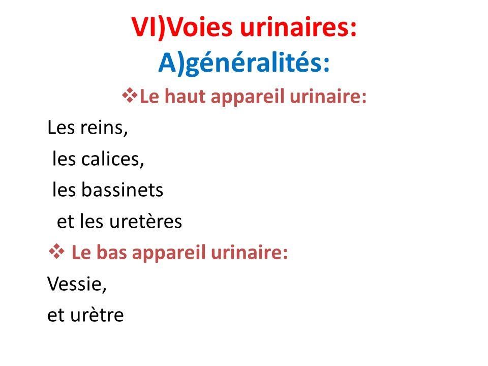 VI)Voies urinaires: A)généralités: