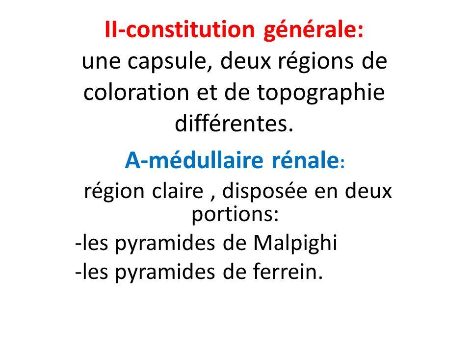 région claire , disposée en deux portions: