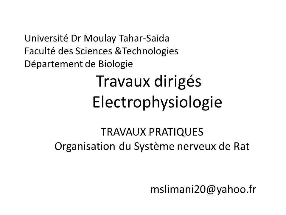 Organisation du Système nerveux de Rat