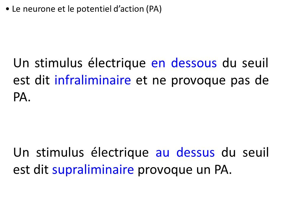 Le neurone et le potentiel d'action (PA)