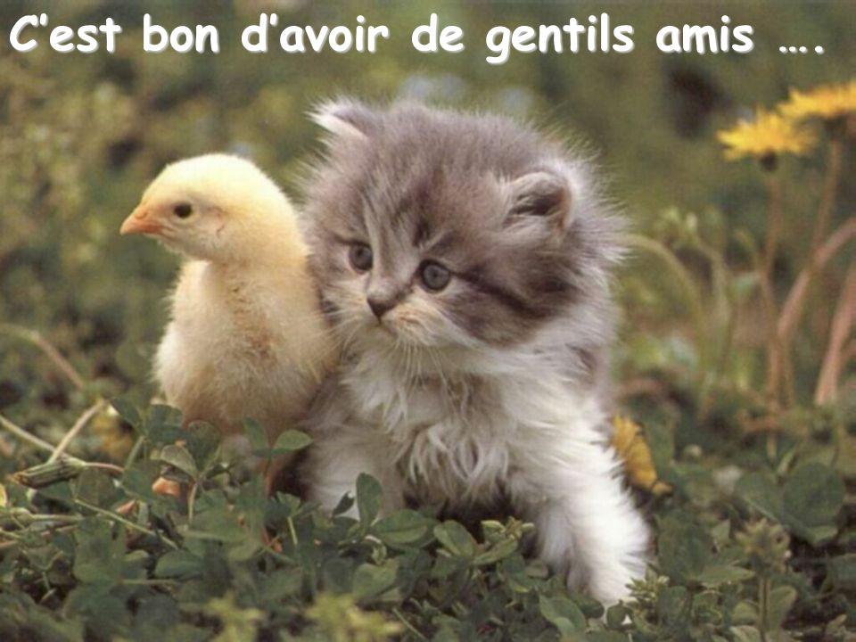 C'est bon d'avoir de gentils amis ….