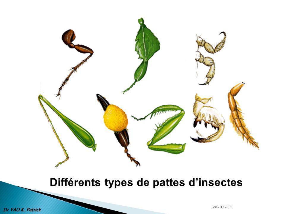 Différents types de pattes d'insectes
