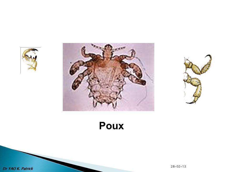 Poux 28-02-13 Dr YAO K. Patrick